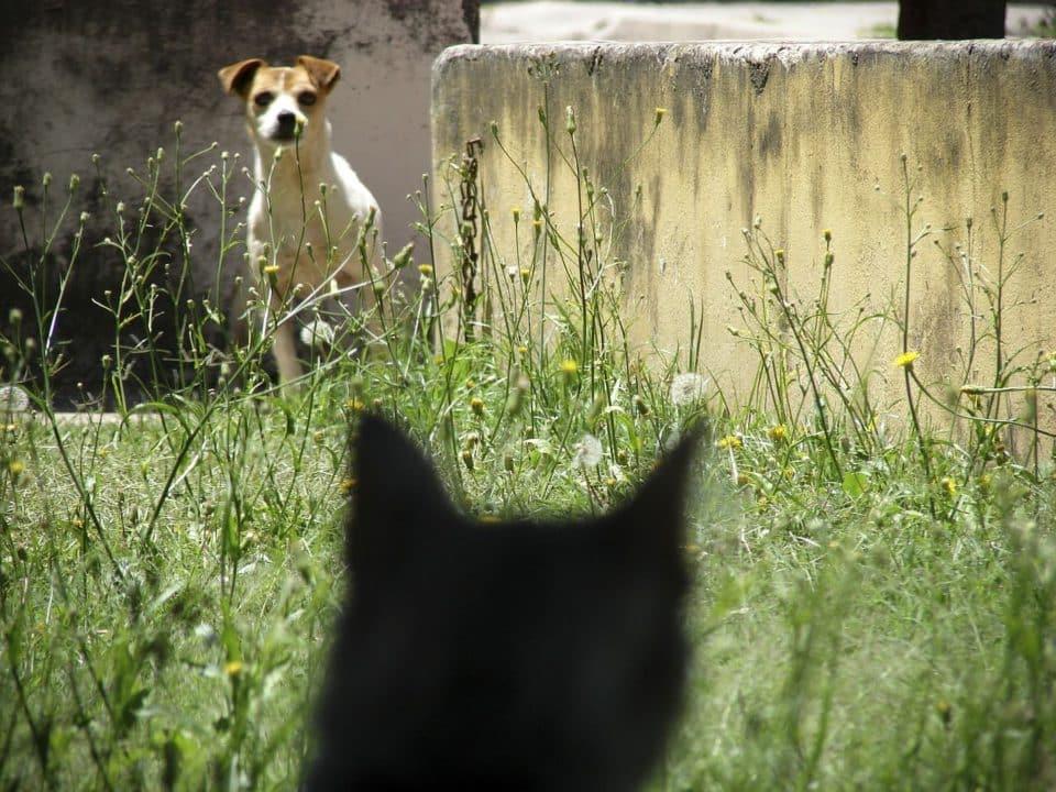 2 hunde da ist der streß meistens vorprogrammiert.