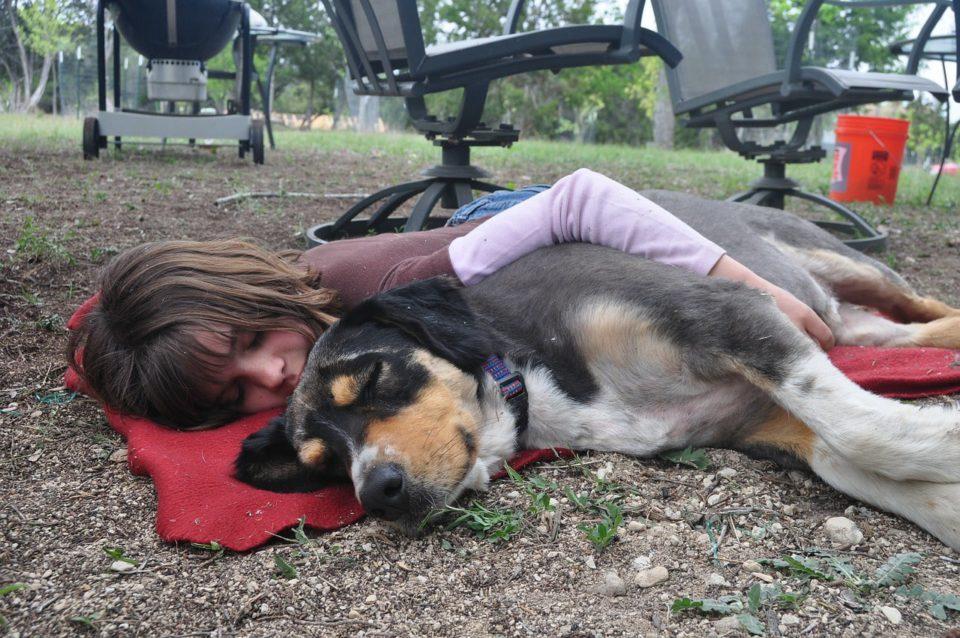 hund loyal schlafposition