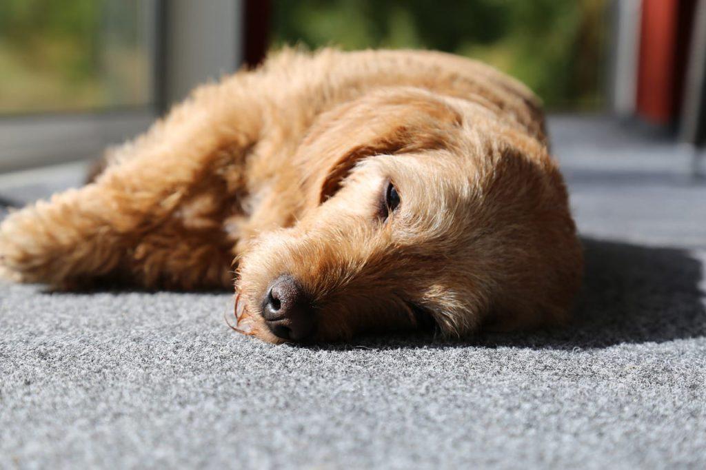 Schlafposition auf der seite liegend