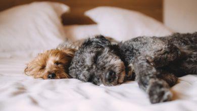 was verrät die schlafposition vom hund