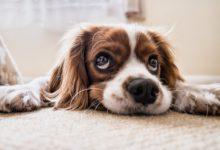 Photo of Wie du leicht den Stress beim Hund abbauen kannst?