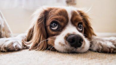 Bild von Wie du leicht den Stress beim Hund abbauen kannst?