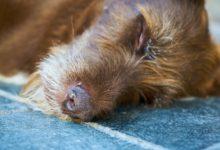 Photo of Hund erbricht andauernd – 4 Gründe dafür und die Lösungen