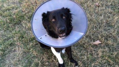 Photo of Ist eine Hundehaftpflichtversicherung Pflicht?
