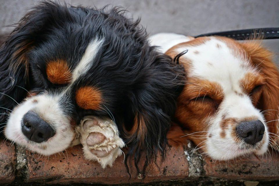 schlafende hunde bauen den stress ab