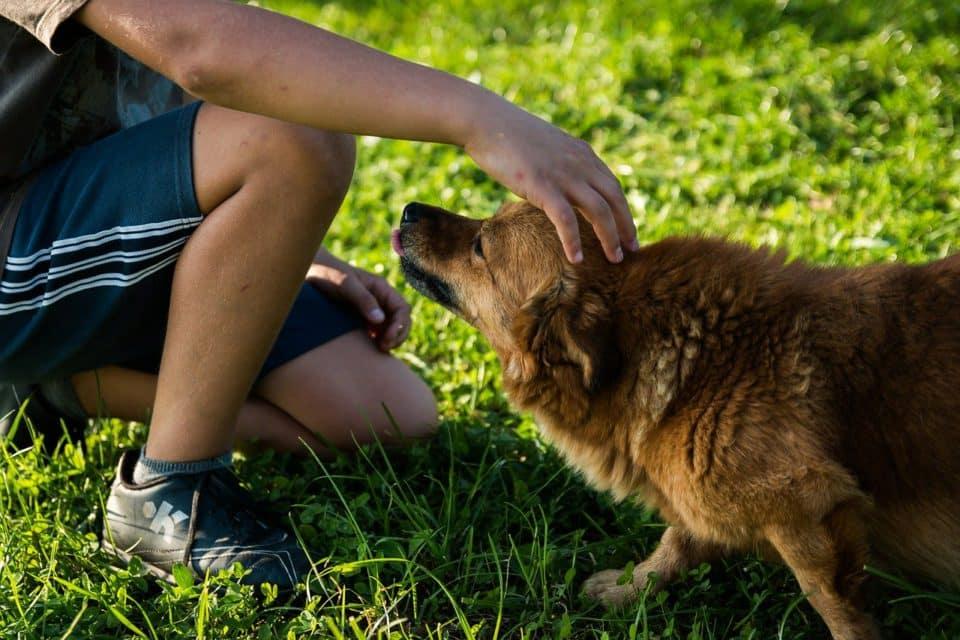 stressige situationen beim Hund können für den Hund gefährlich werden