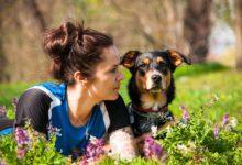 hundeführerschein quiz
