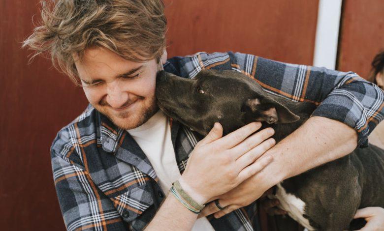 hundetherapie bei deinen 43 problemen
