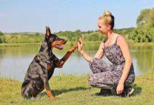 Photo of Kann dein Hund als Therapeut für dich nützlich sein?