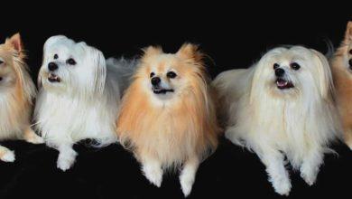 Bild von Hund kaufen, auf was muß ich achten? Wir klären auf