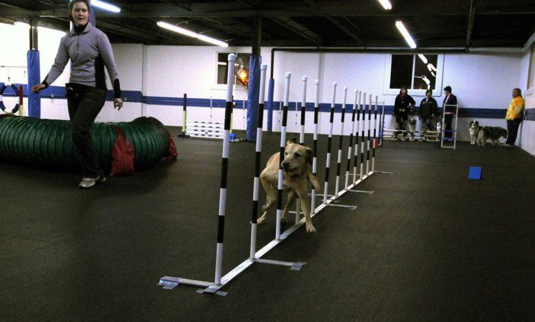 hundeerziehung in einer lokalen hundeschule