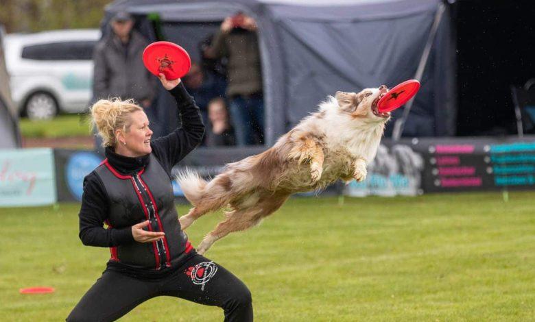 hundesport dogfrisbee wettkampf