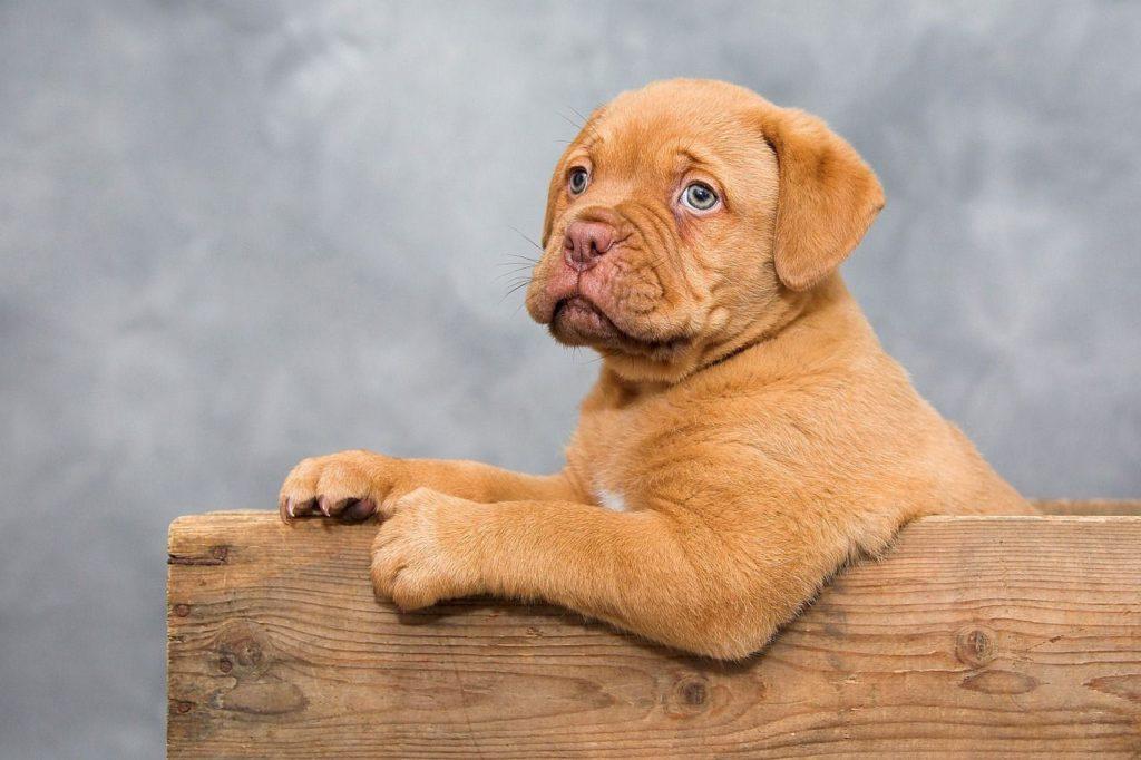 hunde welpen schule hundeerziehung in einer hundeschule