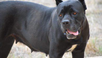 Photo of Unser Plädoyer: Hunde sind keine Kampfmaschinen