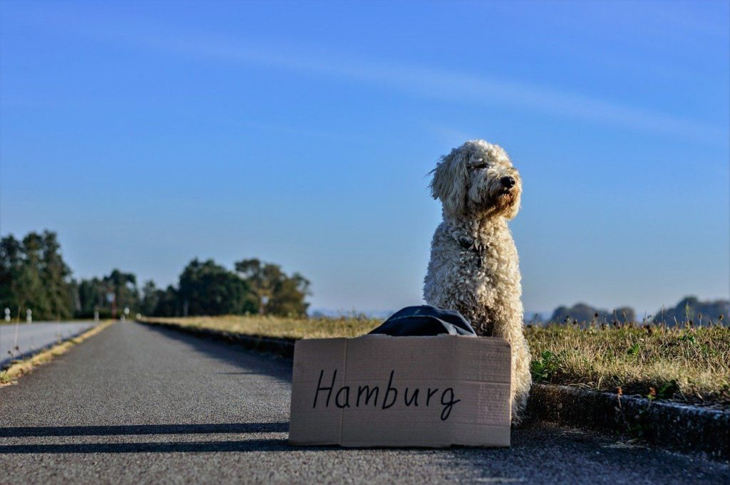 reisecheckliste für den hund ab nach hamburg trampen
