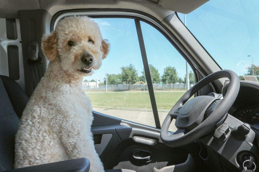 reisecheckliste für den hund im führerhaus
