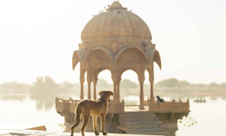 ultimative reisecheckliste für den hund