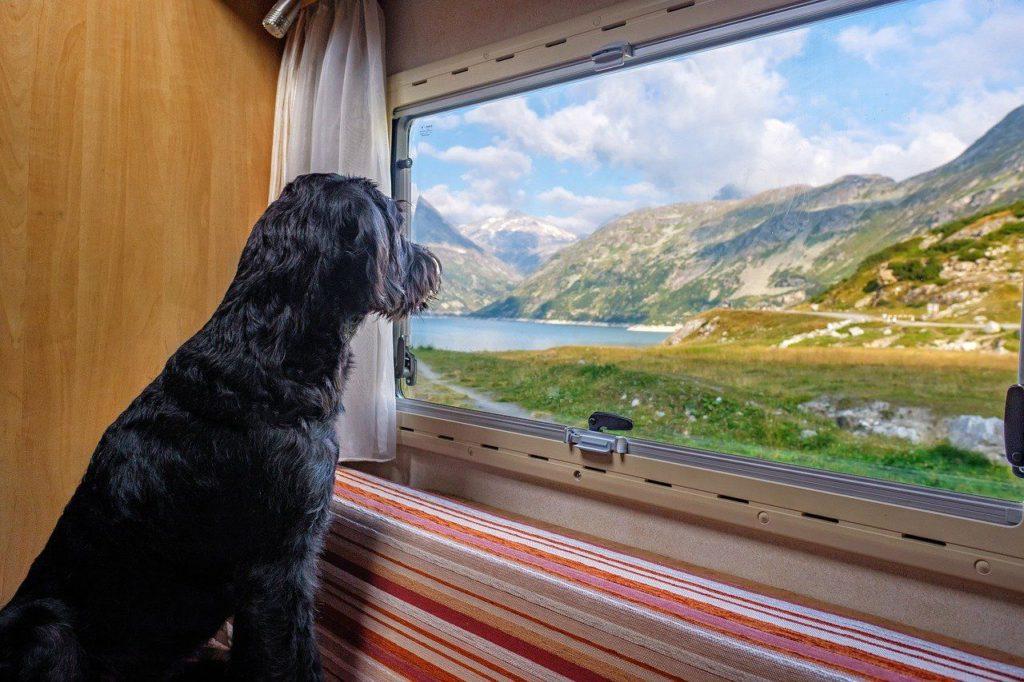 Hundeurlaub in den Bergen