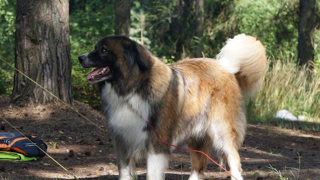 verreisen mit hund auf campingplatz 4 Pfoten Das Portal für Hund und Katz