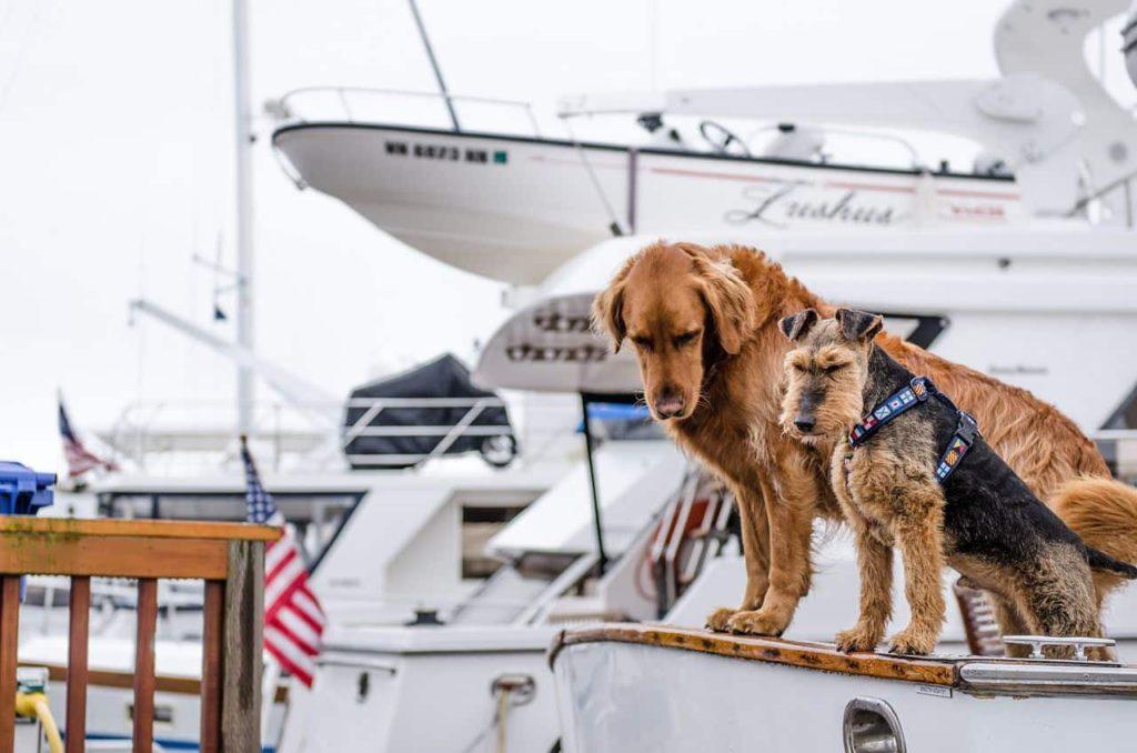 verreisen mit hund auf dem schiff