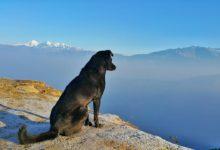 Bild von Verreisen mit Hund – was gilt es zu beachten