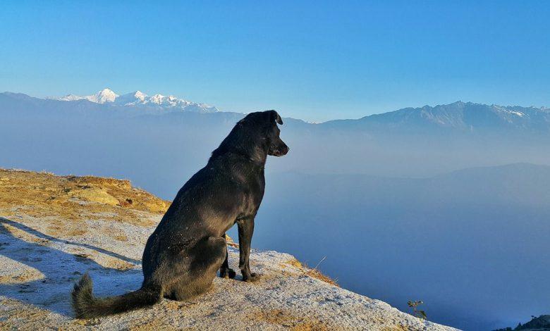 verreisen mit hund beitragsbild
