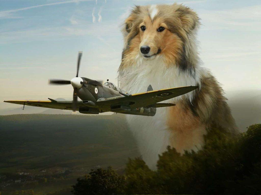 verreisen mit hund im flugzeug
