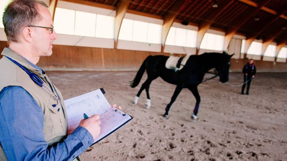 tierarzt für pferde in thierlstein lkr. cham