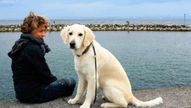 hund als seelenklempner