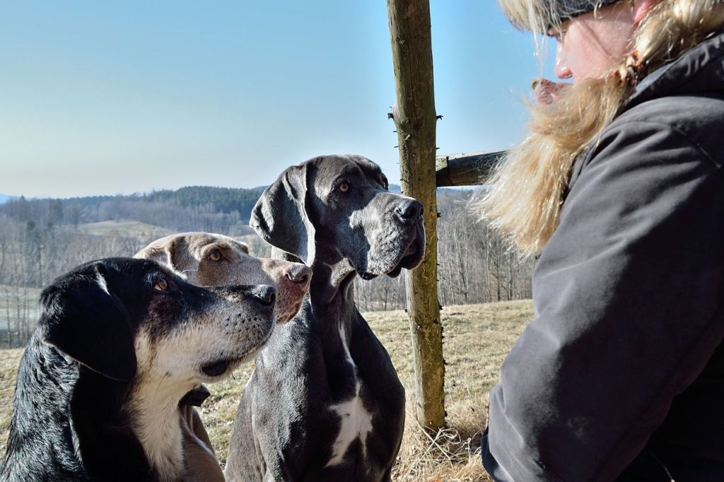 hunde als seelenklempner