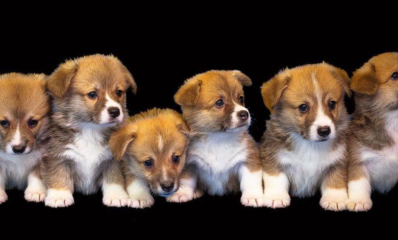 tierarzt für kleintiere in cham