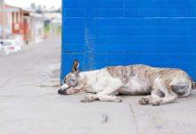 Photo of Fundamentale Aufklärung zur Magendrehung beim Hund