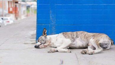 Bild von Fundamentale Aufklärung zur Magendrehung beim Hund