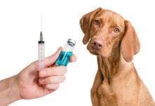 Bild von Jährliche Impfungen der Haustiere nur Profitgier?