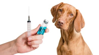 jährliche impfungen der haustiere nur profitgier der tierärzte