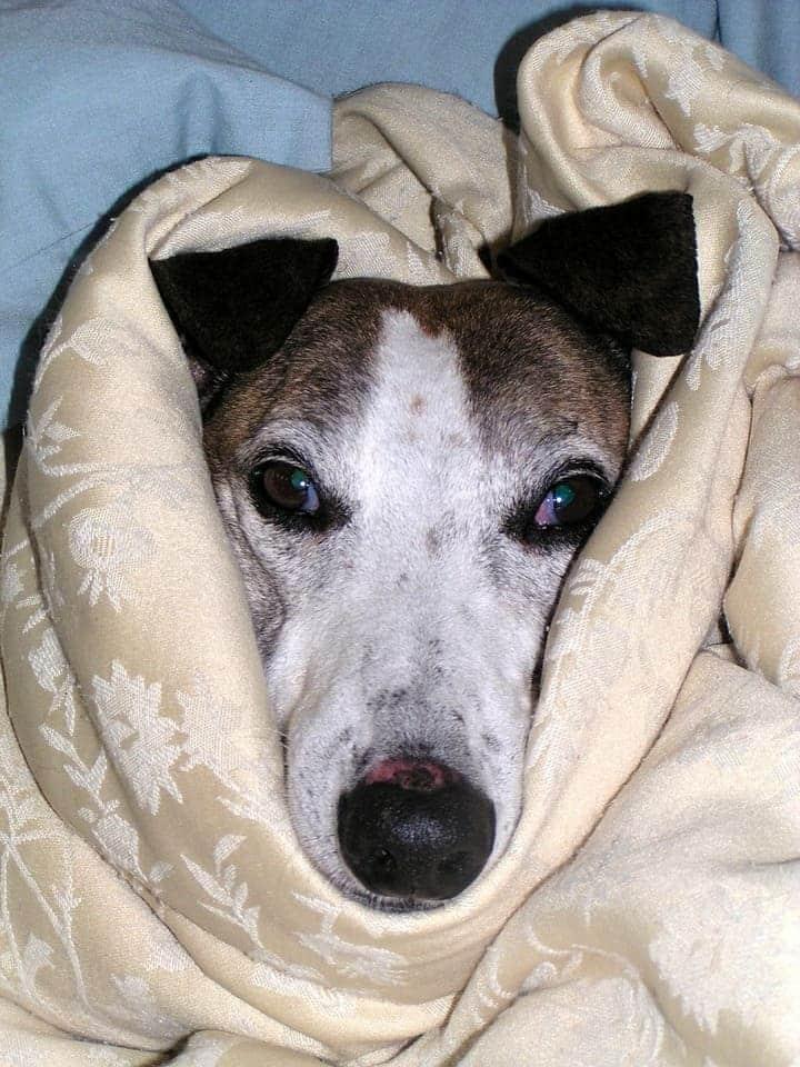 Hund wurde vergiftet er braucht viel Zuneigung und Wärme