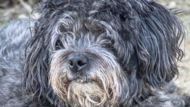 Bild von Eine Vergiftung beim Hund vermutet