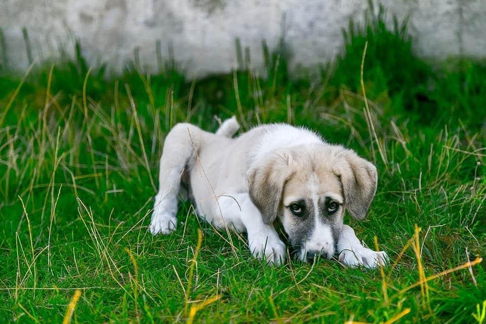 wurde dein hund etwa vergiftet, wie kannst du das erkennen?