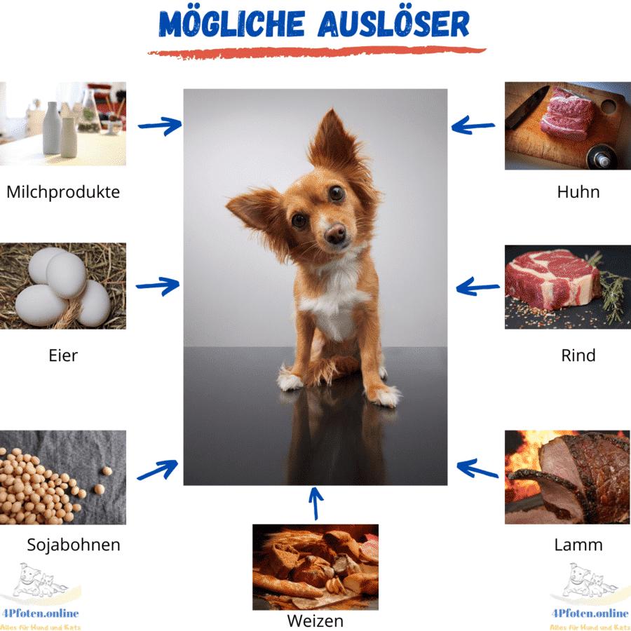 Futtermittelallergien Info Grafik