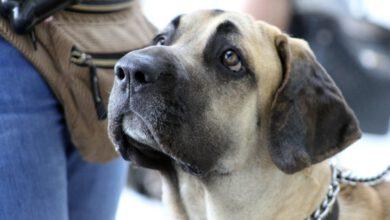 Bild von Die 6 wichtigsten Hundekommandos und was sie bedeuten