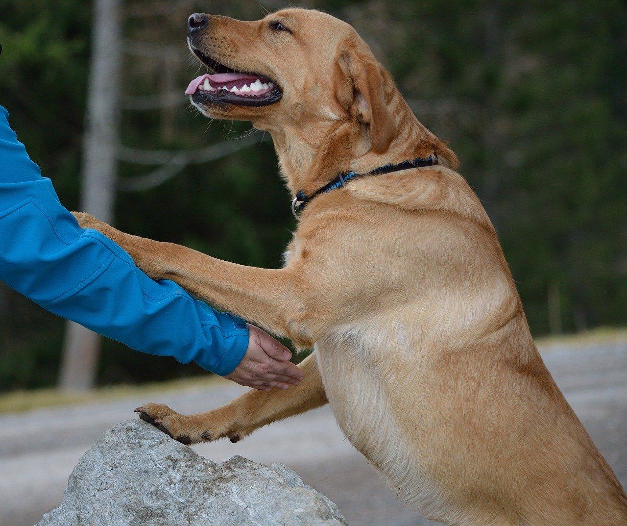 7 gebote als hundehalter - hunderecht - das anspringen kann bereits als sachbeschädigung gelten