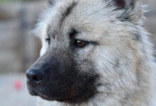 hunderecht - 7 gebote als hundehalter