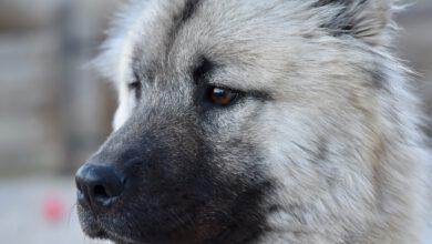 Bild von Hunderecht – Kennst du diese 7 Pflichtgebote als Hundehalter?
