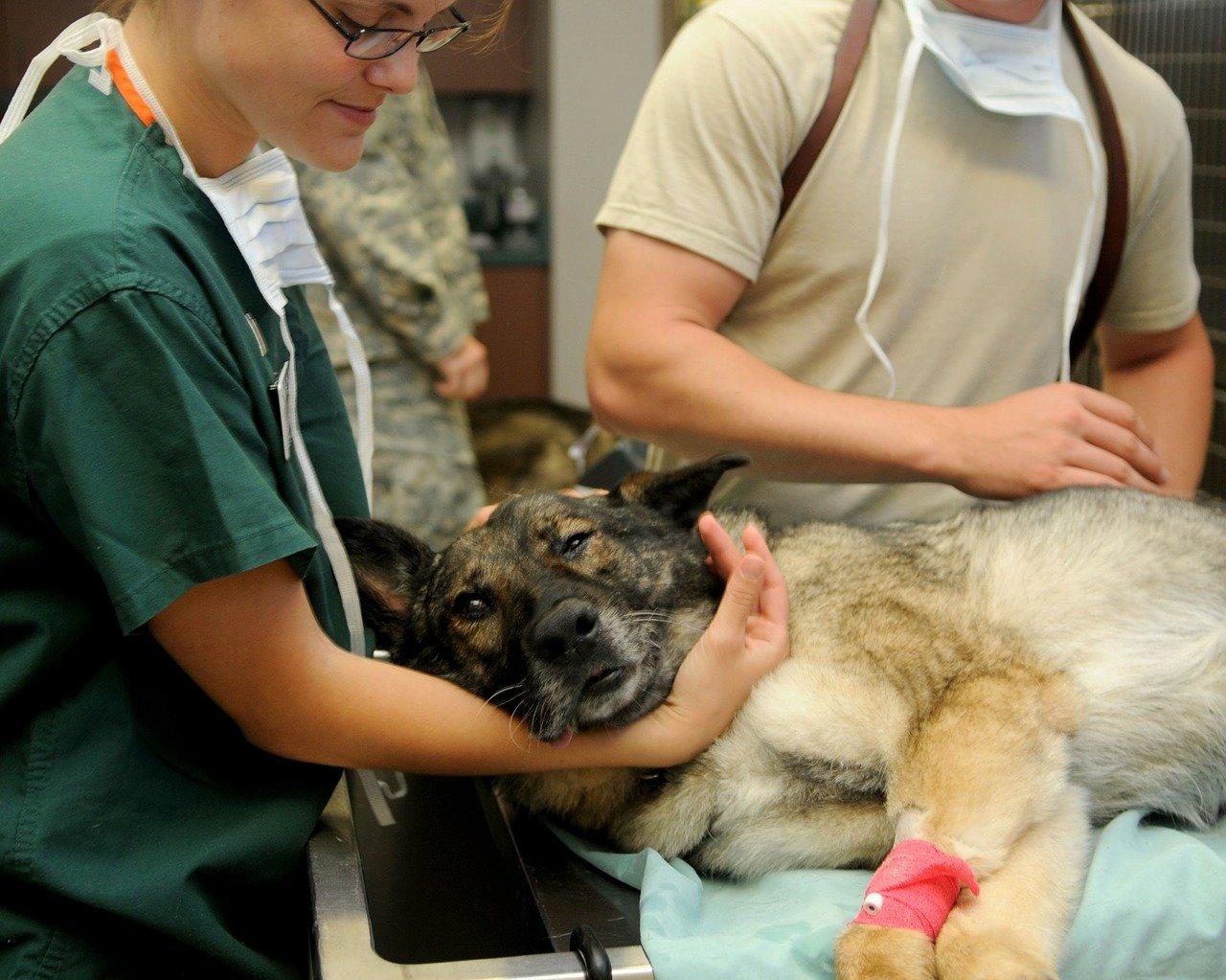 hunderecht-tierarzt-verbindlicher-vertrag