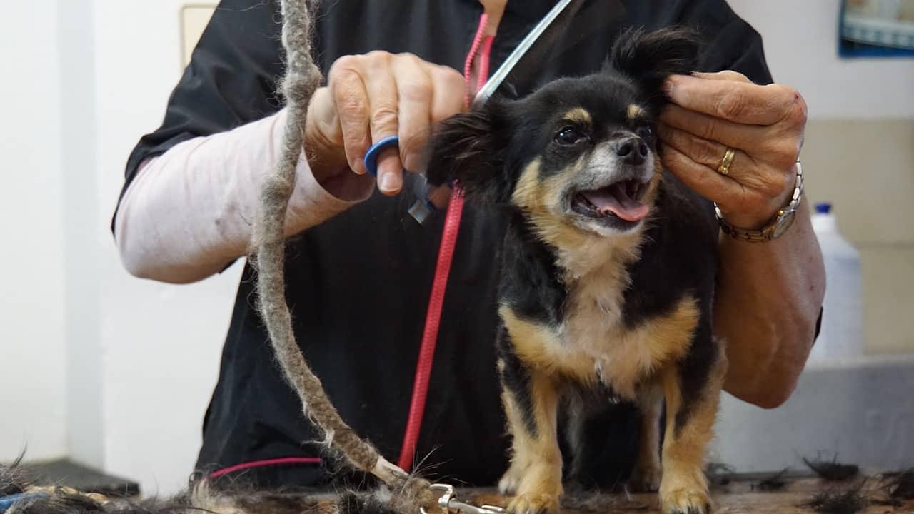Hundefriseur zu Hause absetzbar