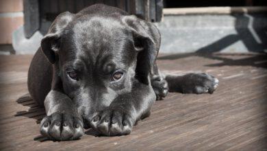 Bild von Ist eine Tierkrankenversicherung für meine 4Pfoten sinnvoll?
