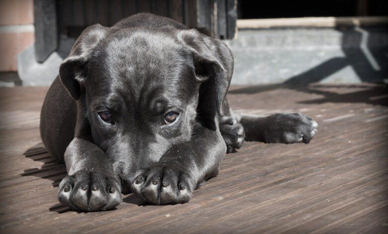 tierkrankenversicherung hund