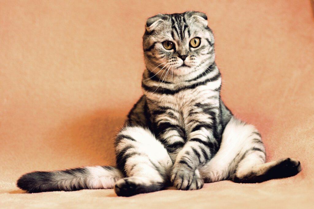 Tierkrankenversicherung Katze