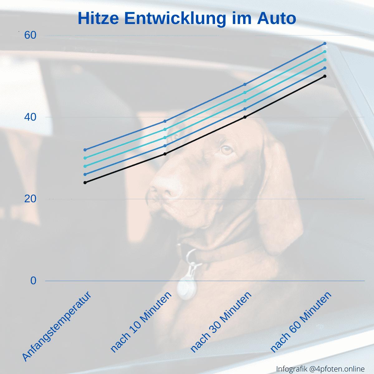 hitzeentwicklung im auto - hitzschlag beim hund