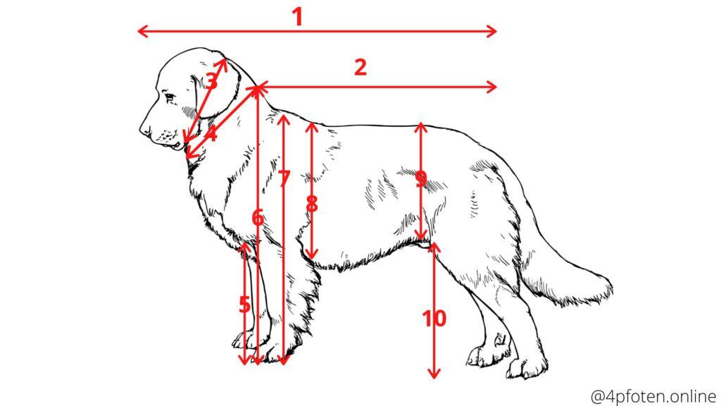 hund-messen-alle-messmöglichkeiten